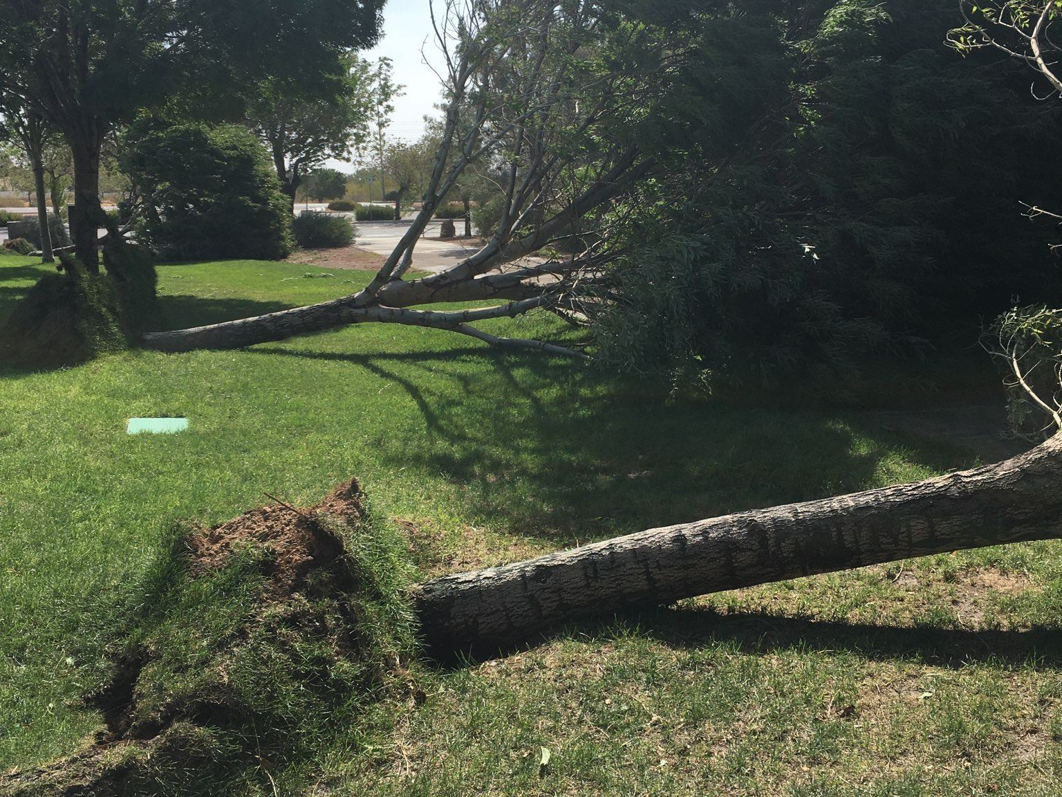 trees down 9.8.2020